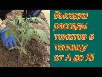 Мы всегда садим томаты именно так и очень довольны урожаями!