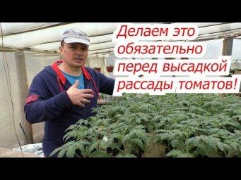 Не высаживаем томаты в теплицу пока не сделаем две простые вещи!